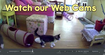LIVE WEB CAMS