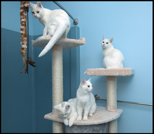 All Four Kittens_med a.jpg